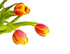 Free Beautiful Bouquet Of Tulips Stock Photos - 17143453