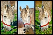 Free Three Horses Royalty Free Stock Photo - 17144245