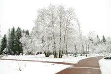 Free First Snow Royalty Free Stock Photography - 17144857