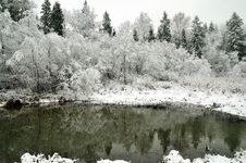 Free Winter Forest Stock Images - 17144974