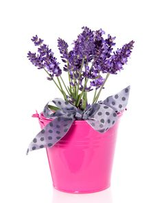 Free Purple Lavender In A Pink Bucket Royalty Free Stock Images - 17145479