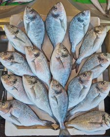 Free Fresh Fish At A Market Royalty Free Stock Photo - 17145655
