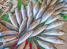 Fresh Fish At A Market Royalty Free Stock Images