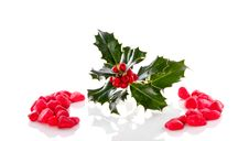 Free A Christmas Holly Branch Stock Images - 17145964
