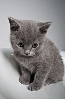 Free Grey Kitten Royalty Free Stock Photos - 17146408