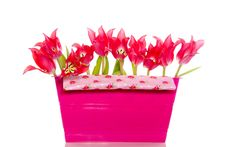 Free Red Tulips In A Plastic Box Stock Image - 17146651