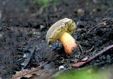 Free Fungus Royalty Free Stock Photos - 17146738