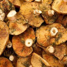 Free Red Pine Mushroom Royalty Free Stock Image - 17149296