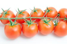 Free Tomatoes Royalty Free Stock Photo - 17149925