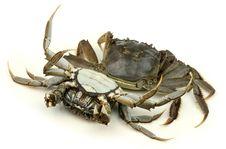 Free Crab Stock Photo - 17150230