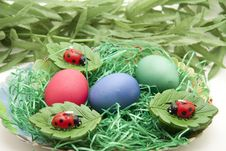 Easters Eggs And Ladybirds Royalty Free Stock Photos