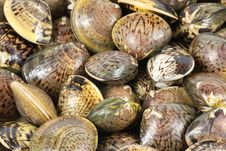 Free Clams Royalty Free Stock Photography - 17151737