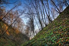 Free Hillock In The Forest, Autumn Season. Royalty Free Stock Photography - 17153937