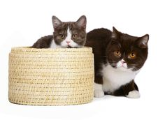 Free Two Cats With A Basket. Royalty Free Stock Image - 17157036
