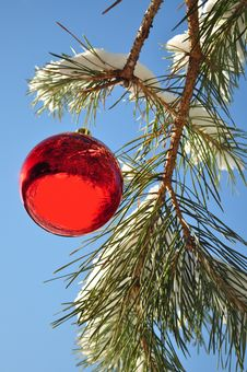Free Christmas Ball, In Forest Royalty Free Stock Photos - 17157158