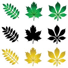 Free Herbarium Stock Photos - 17158553