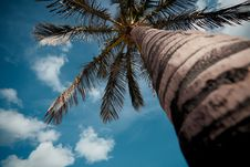 Free Palm Tree Royalty Free Stock Photo - 17160555