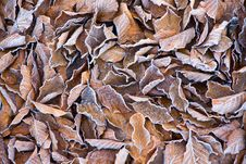 Free Background Of Frosty Leaves Stock Photo - 17160910