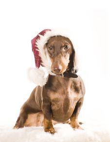 Xmas Dog Isolated Royalty Free Stock Image