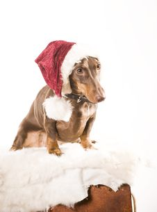Free Xmas Dog Isolated Stock Photo - 17161020