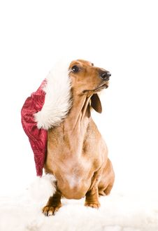 Free Xmas Dog Isolated Royalty Free Stock Image - 17161026