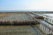 Free Bamboo Sea Stock Photos - 17161443