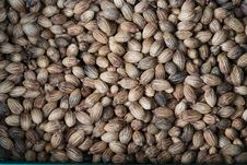 Free Palm Seed. Royalty Free Stock Image - 17161936