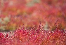 Free Red Vegetation Stock Photo - 17162550