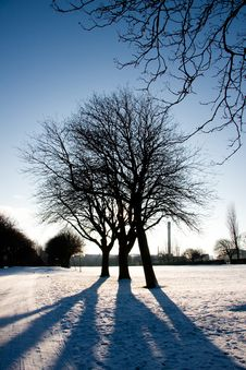 Silhouette Of Three Trees In Winter Royalty Free Stock Image