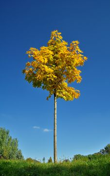Free Tree In Autumn Royalty Free Stock Images - 17165579