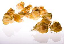 Free Ripe Cape Gooseberry (physalis) Stock Photos - 17165673