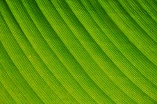 Free Leaf Closeup - Background Royalty Free Stock Image - 17165836