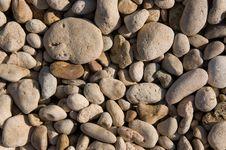Free Marine Pebble Stock Photography - 17166502