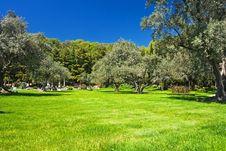 Free Olive Grove Stock Photo - 17167730