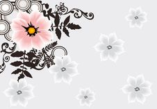 Free Pink Flower On Grey Floral Background Stock Photos - 17168143