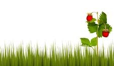 Free Wild Strawberry In Green Grass Royalty Free Stock Images - 17168219