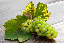 Free Fresh Grape Stock Photography - 17169942