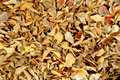 Free Dry Leaves Royalty Free Stock Images - 17171109
