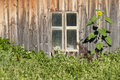 Free Window With Sunflower And Weed Royalty Free Stock Photos - 17173728