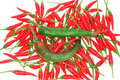 Free Green And Red Chili Royalty Free Stock Photo - 17175605