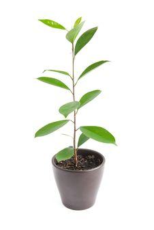 Free Houseplant Royalty Free Stock Images - 17170259