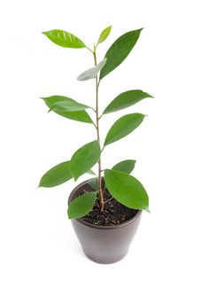Free Houseplant Royalty Free Stock Photography - 17170267