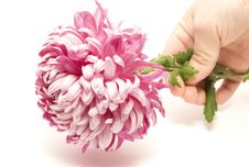 Free Flower In My Hand Stock Image - 17171111