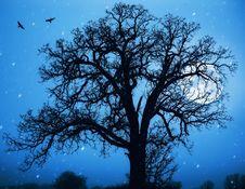 Free Moon.jpg Royalty Free Stock Image - 17171336