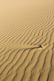 Free Sand Background Stock Images - 17171914