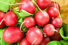 Free Freshly Harvested Radishes Royalty Free Stock Photos - 17172458