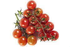Free Tomatos Royalty Free Stock Photo - 17173845