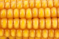 Free Corn Stock Photo - 17174100