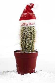 Free Cactus Santa Stock Images - 17174664