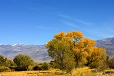 Fall Colors In The Easter Sierra Stock Photo